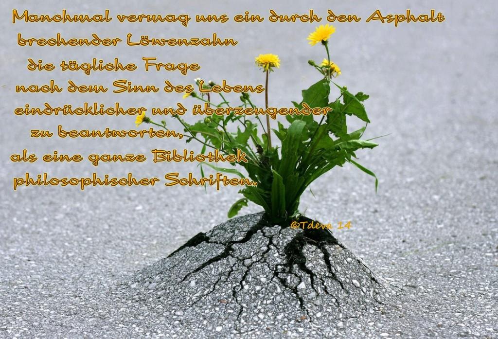 Sinn des Lebens -©Tdeva 14